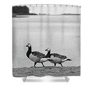 Walk On The Beach. Barnacle Goose Shower Curtain