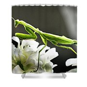 Walkin Tall On Silk Shower Curtain