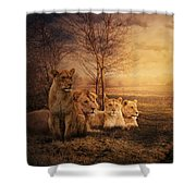 Walking Between Lions Shower Curtain
