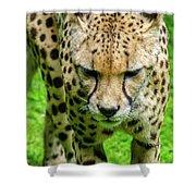 Walking Cheeta Shower Curtain