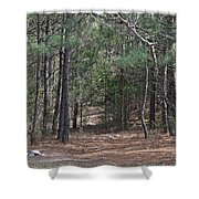 Walking In The Pine Forest Shower Curtain