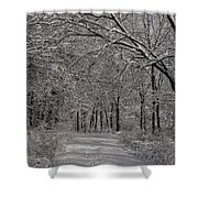 Walking In The Woods Shower Curtain