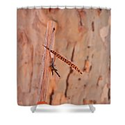 Walking Stick And Pheasant Feather Shower Curtain