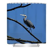 Walking The High Branch Shower Curtain