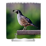 Walking The Plank Shower Curtain