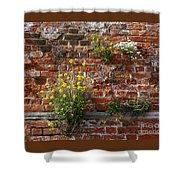 Wall Flowers Shower Curtain