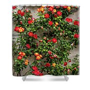 Wall Of Roses Shower Curtain