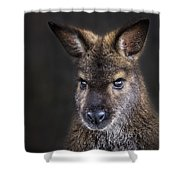 Wallaby Portrait Shower Curtain