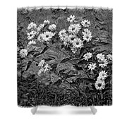 Wallflower Ain't So Bad Bw Shower Curtain