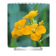 Wallflower Orange Shower Curtain