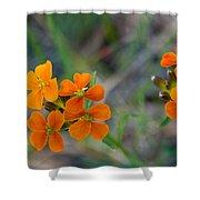 Wallflower Wildflower Shower Curtain
