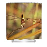 Wandering Glider Dragonfly Shower Curtain