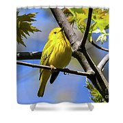 Warbler In Yellow Shower Curtain