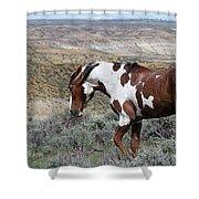 Warhorse Shower Curtain