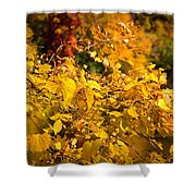 Warm Fall Colors Shower Curtain