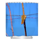 Warming Wings Shower Curtain