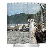 Washington Beach Shower Curtain