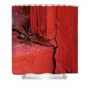 Wasp And Red Shower Curtain