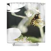 Wasp At Wotk Shower Curtain