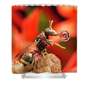 Wasp Blowing Bubble 16057b Shower Curtain