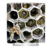 Wasp Nursery Shower Curtain