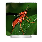 Wasp On A Leaf 001 Shower Curtain