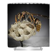 Wasp On A Nest Shower Curtain