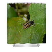 Wasp On A Sunny Day Shower Curtain