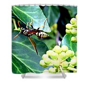 Wasp On The Ivy Shower Curtain