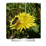 Wasp Visiting Dandelion Shower Curtain