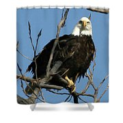 Watch On The Fox Shower Curtain