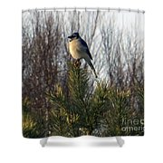 Watchful Blue Jay Shower Curtain by Kathy DesJardins
