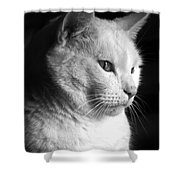 Watchful Shower Curtain by Bob Orsillo