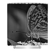 Watchful Butterfly Shower Curtain