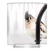 Watching Shower Curtain