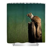 Watching Out- 365-66 Shower Curtain
