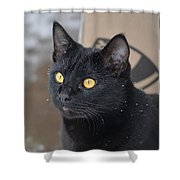 Watching Snow Fall Shower Curtain