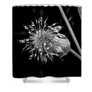 Wate Awens Shower Curtain