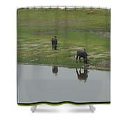 Water Buffaloe Shower Curtain