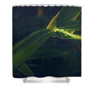 Water Catcher Shower Curtain