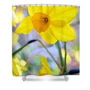 Water Color Daffodil Shower Curtain