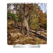 Water Cypress Shower Curtain