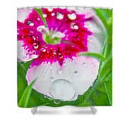 Water Diamond On White Shower Curtain