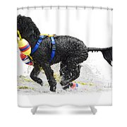 Water Dog 7 Shower Curtain