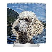 Water Dog Shower Curtain