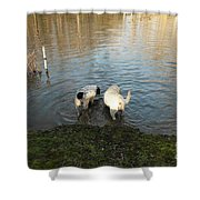 Water Dogs Shower Curtain
