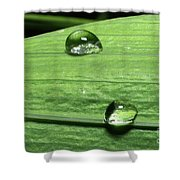 Water Droplet On A Leaf Shower Curtain