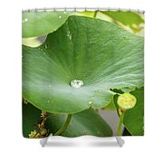 Water Droplet  Shower Curtain