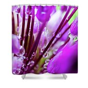 Water Droplets And Purple Flower Shower Curtain
