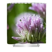 Water Droplets On Chives Flowers Shower Curtain